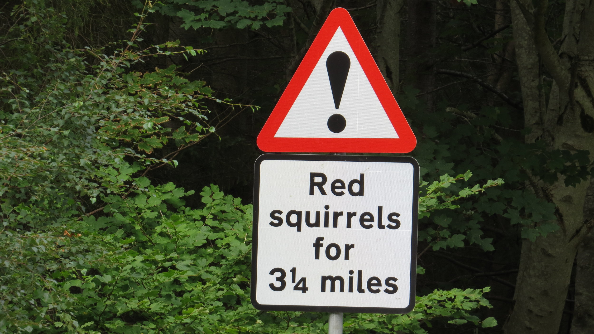 Very Precise Squirrels