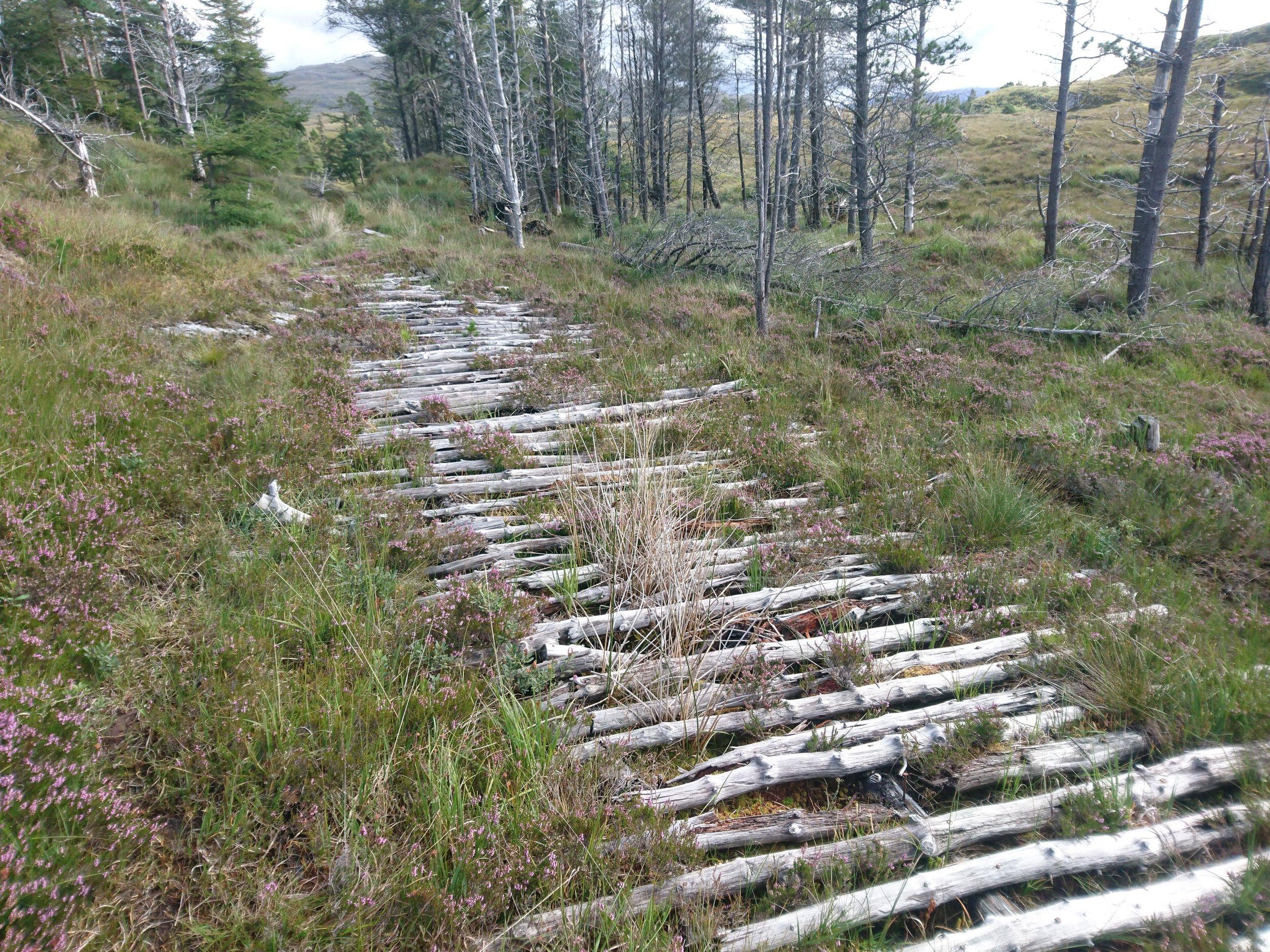 Timber Track I