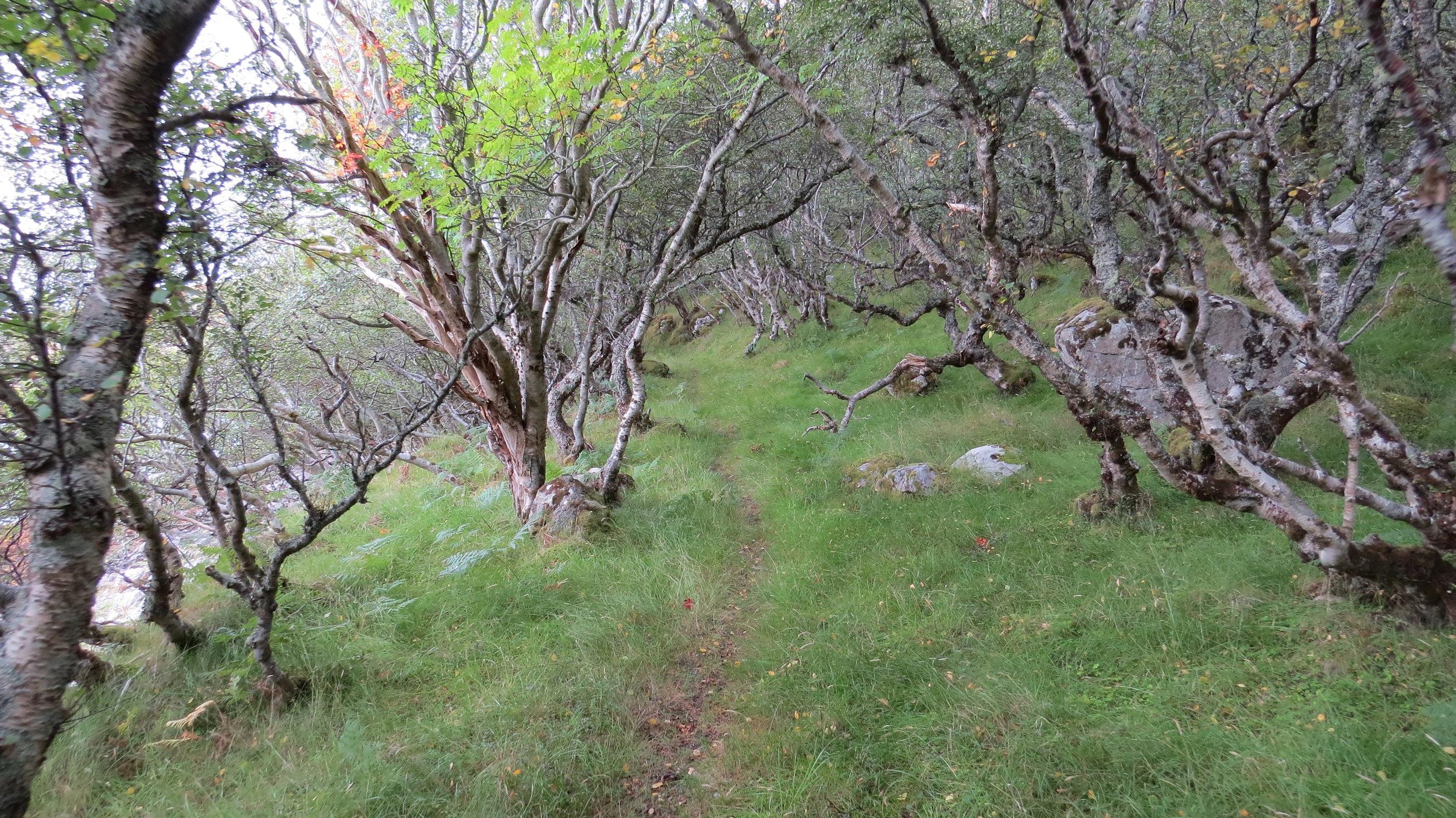 Path towards Inverhope