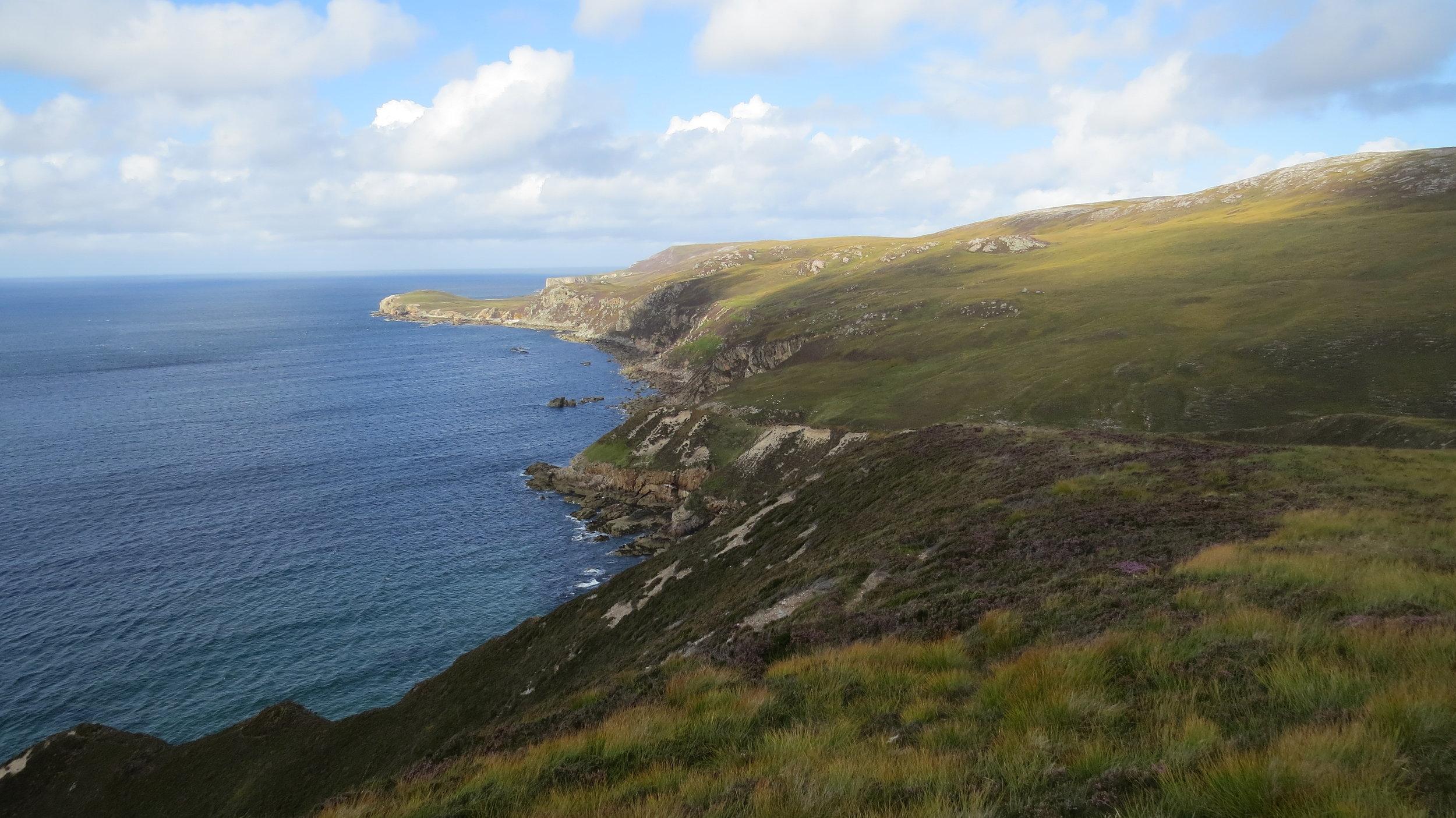 Path towards Whiten Head