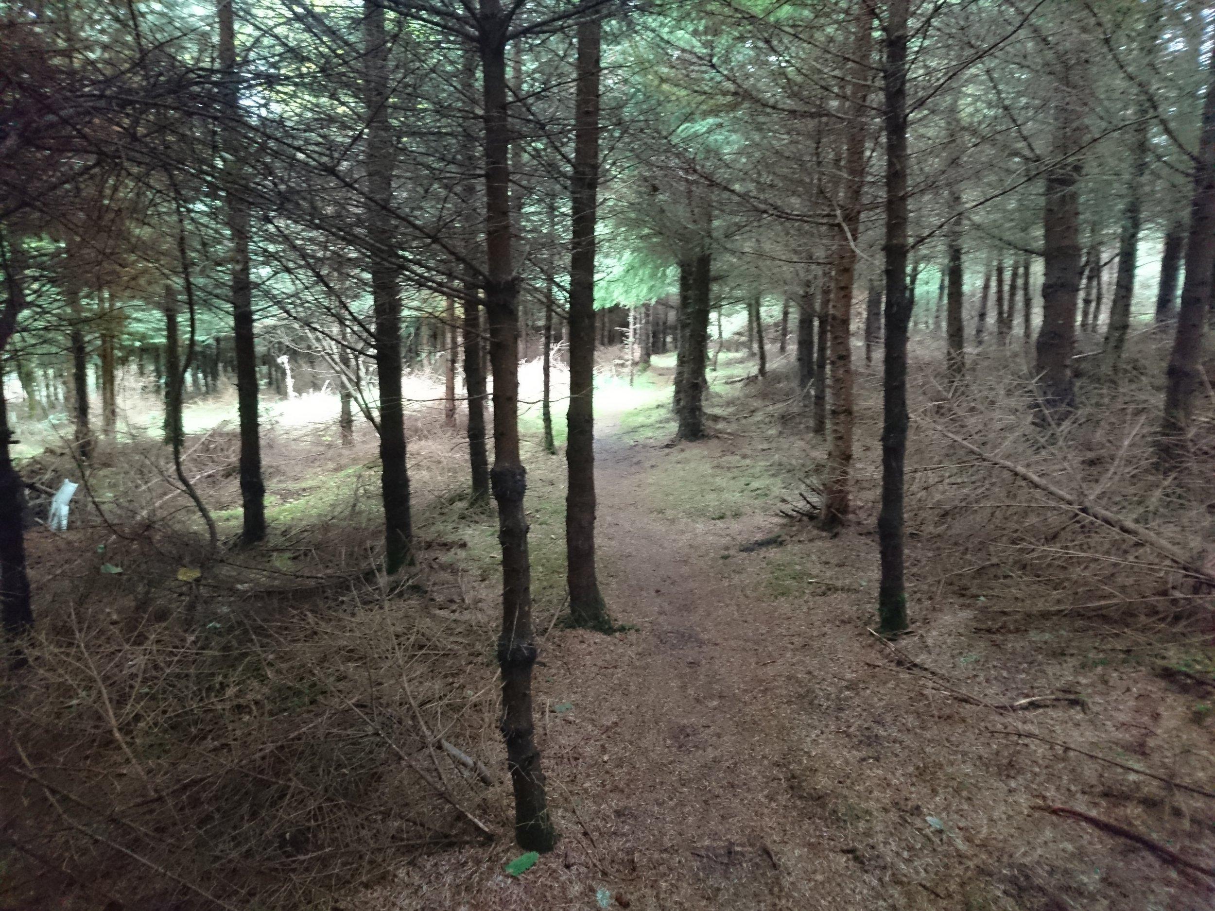 Woods behind Dunbeath Castle