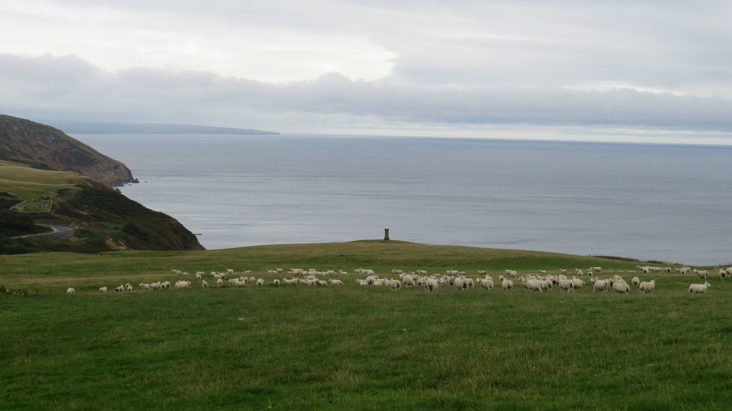 Sheep/Monument above Berriedale