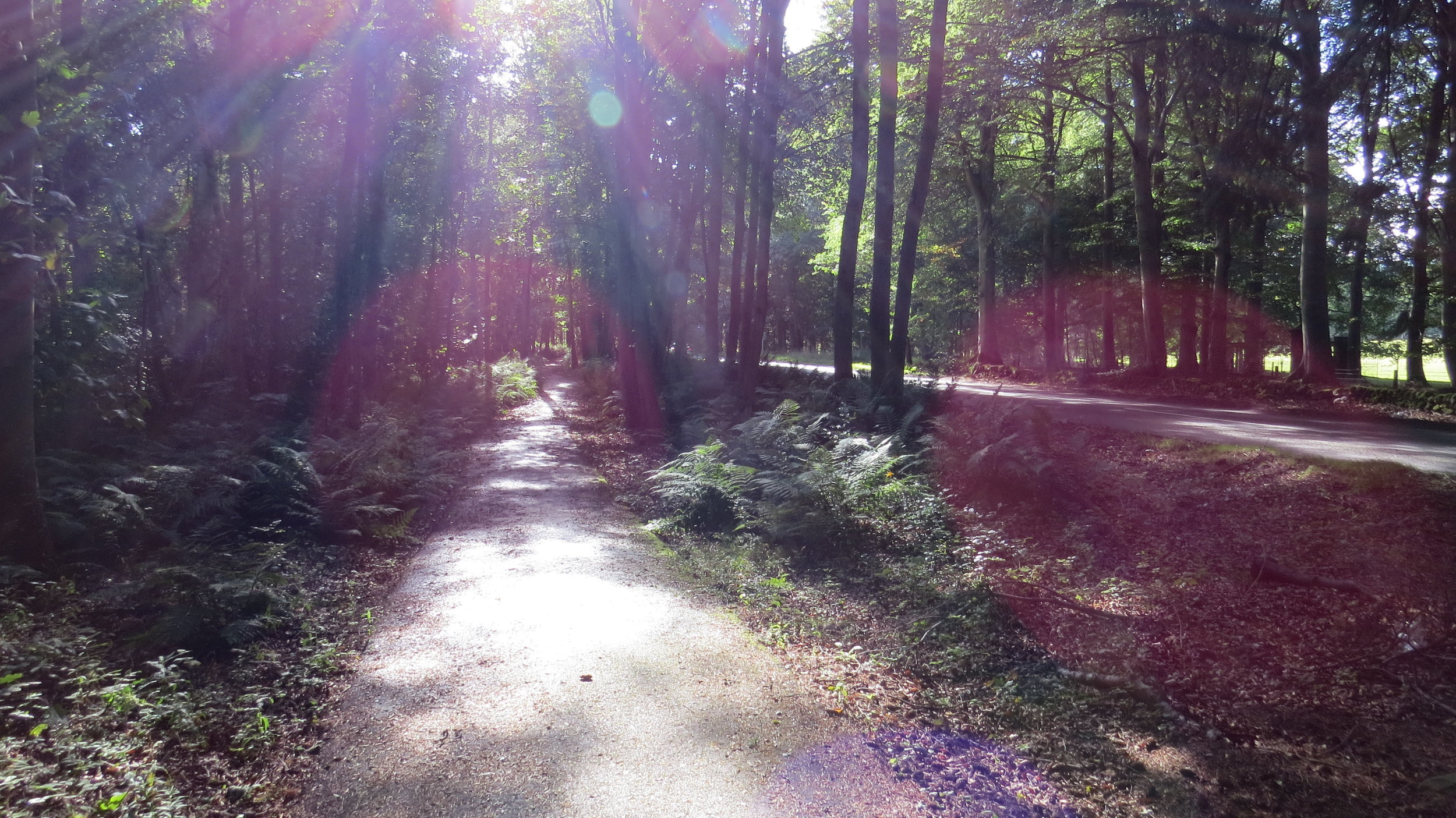 Segregated Path II