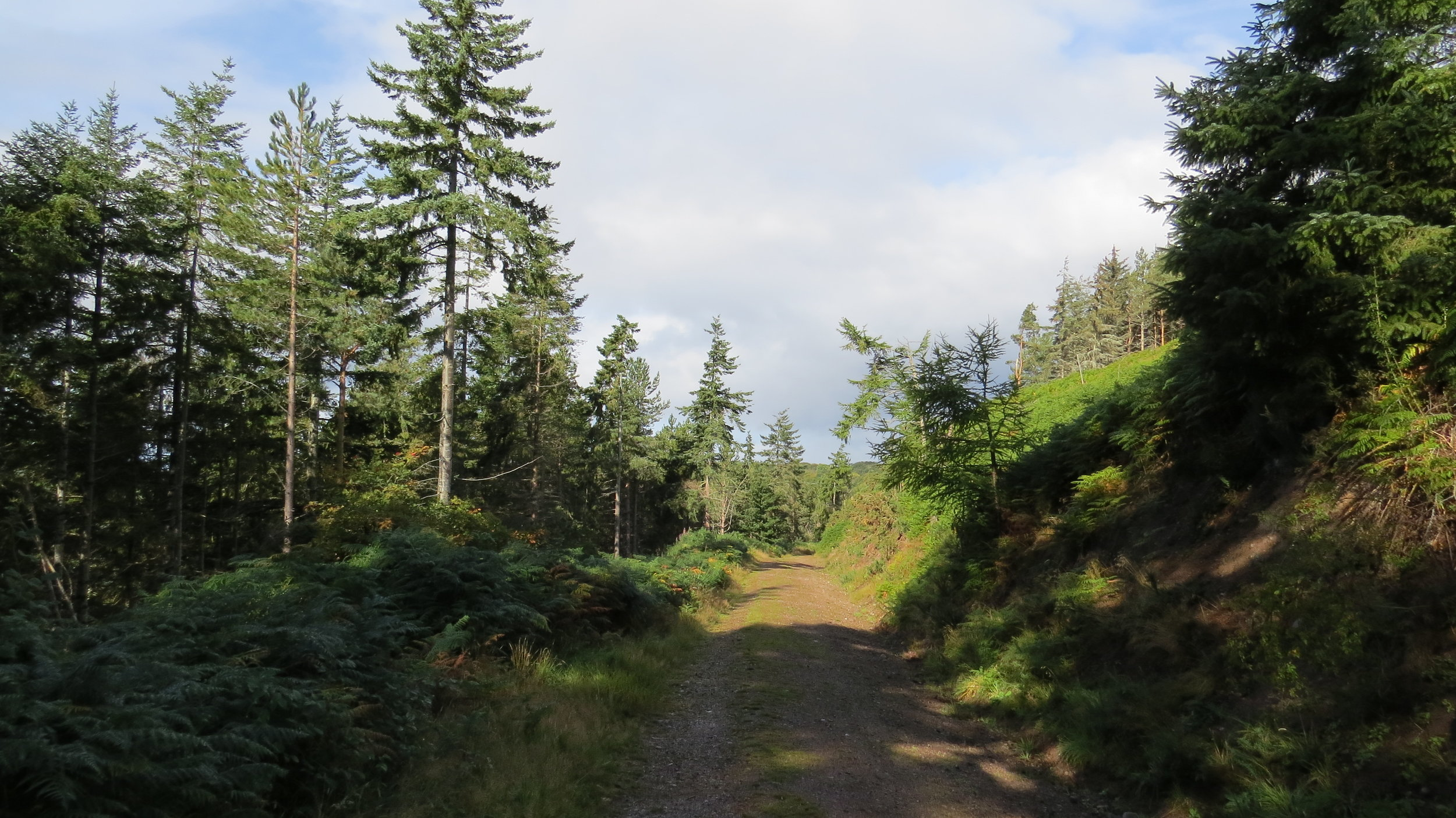 Track around Wood Hill