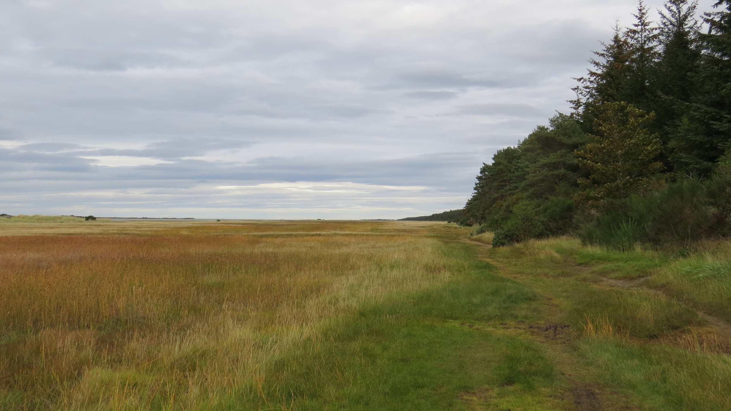 Edge of Culbin Forest