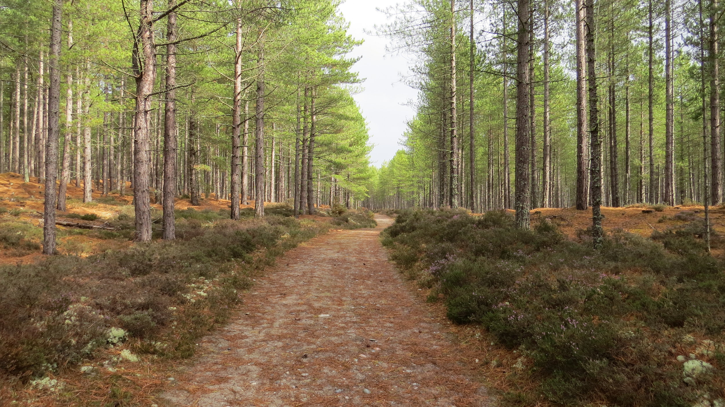Forest Track near Burghead