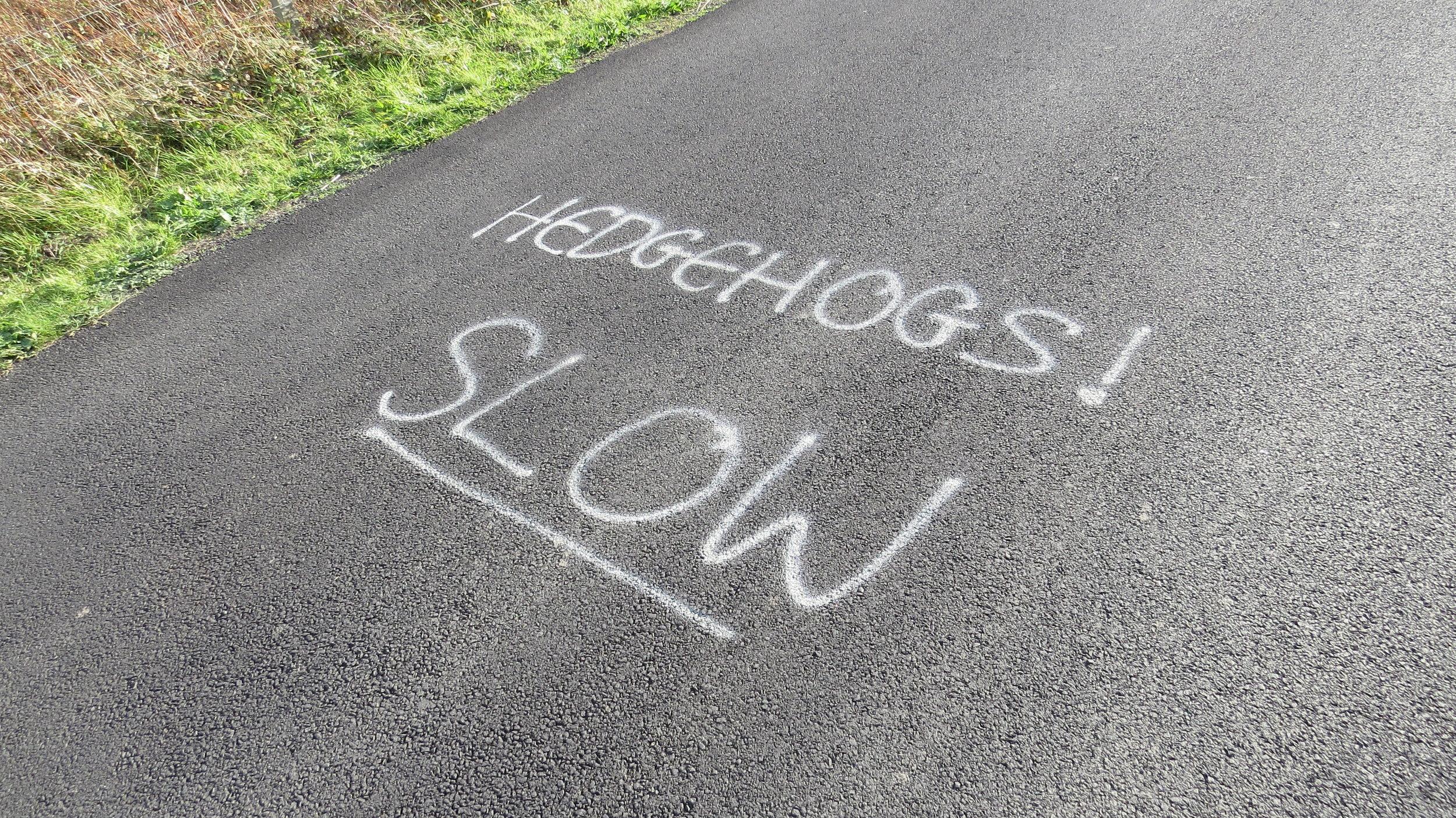 I Prefer Fast Hedgehogs