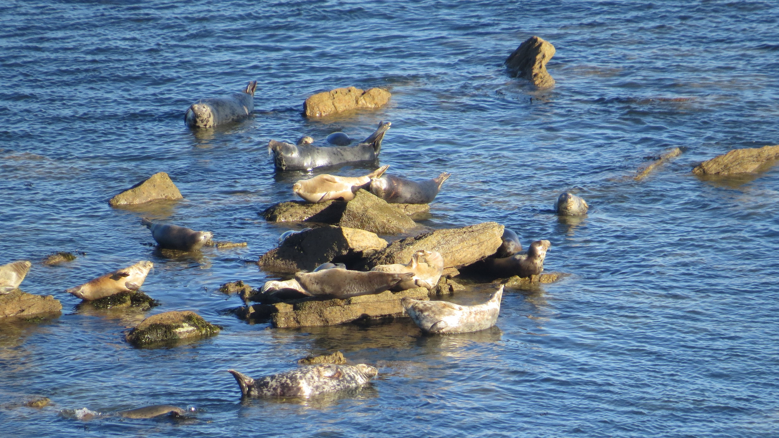 Seals Basking in the Sun