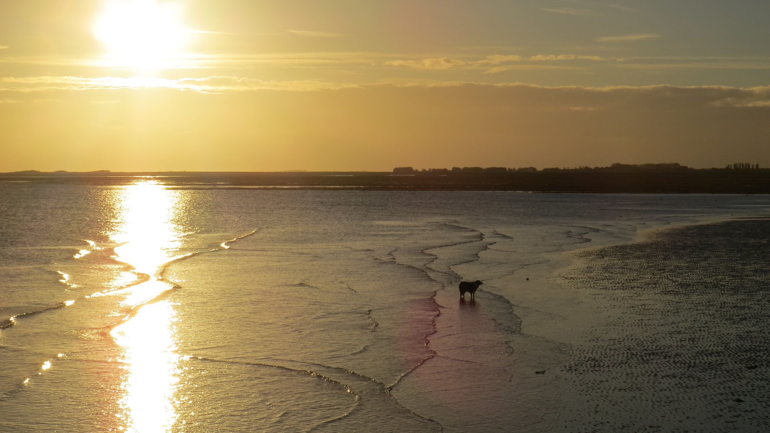 Dog enjoying the Sea