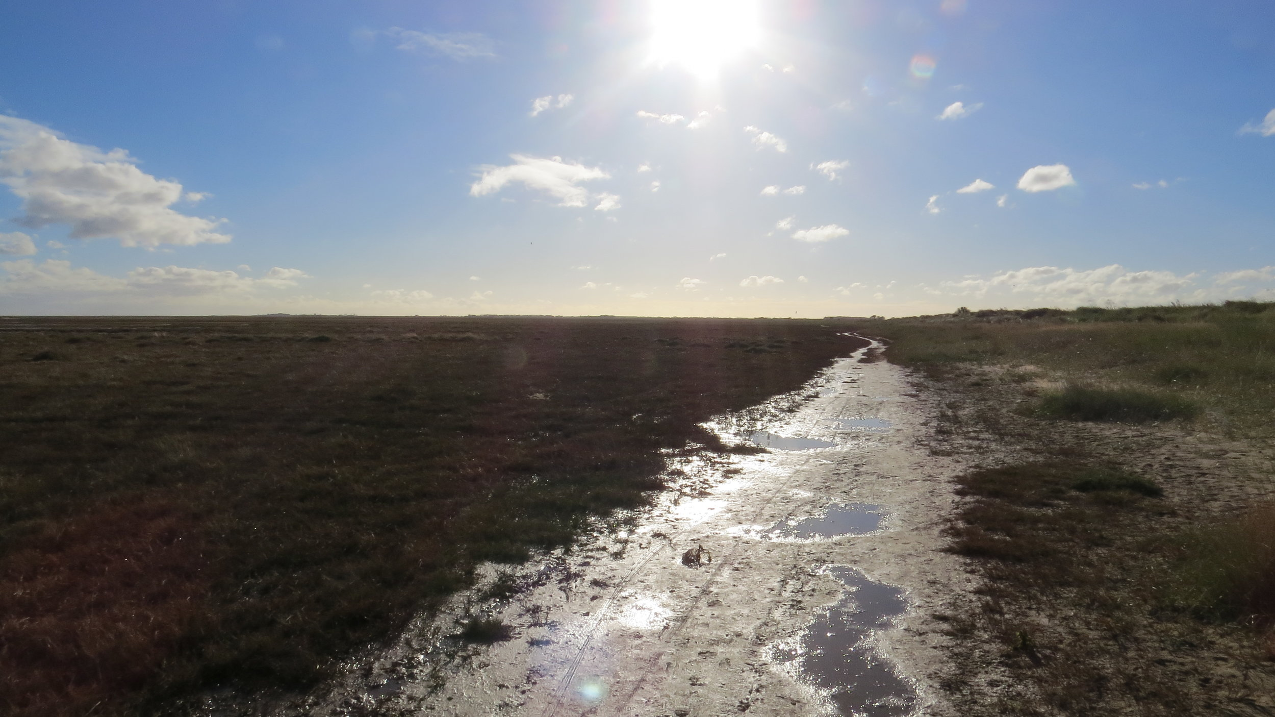 Down on the Mudflats
