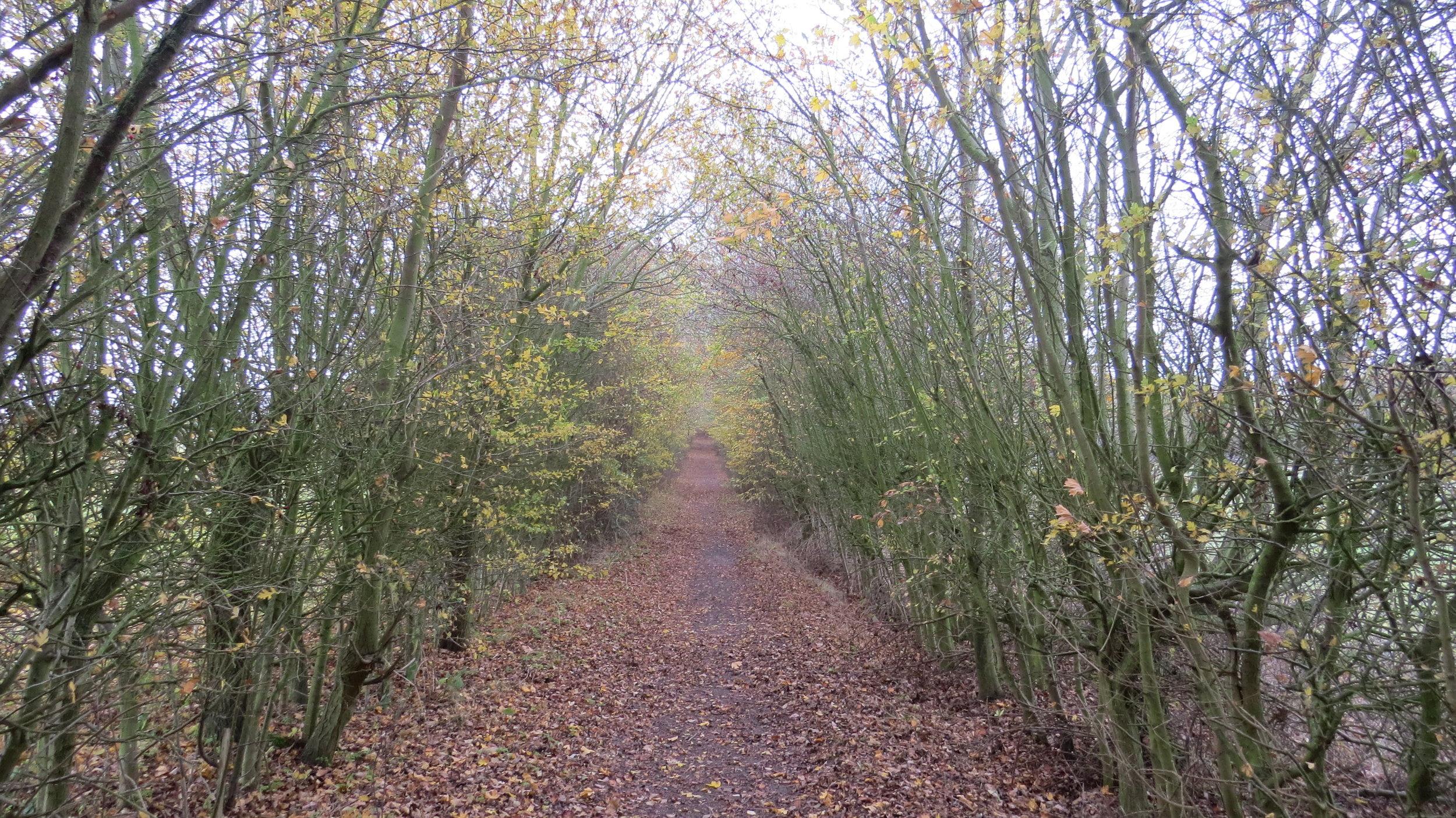 Woodland Avenue Walking