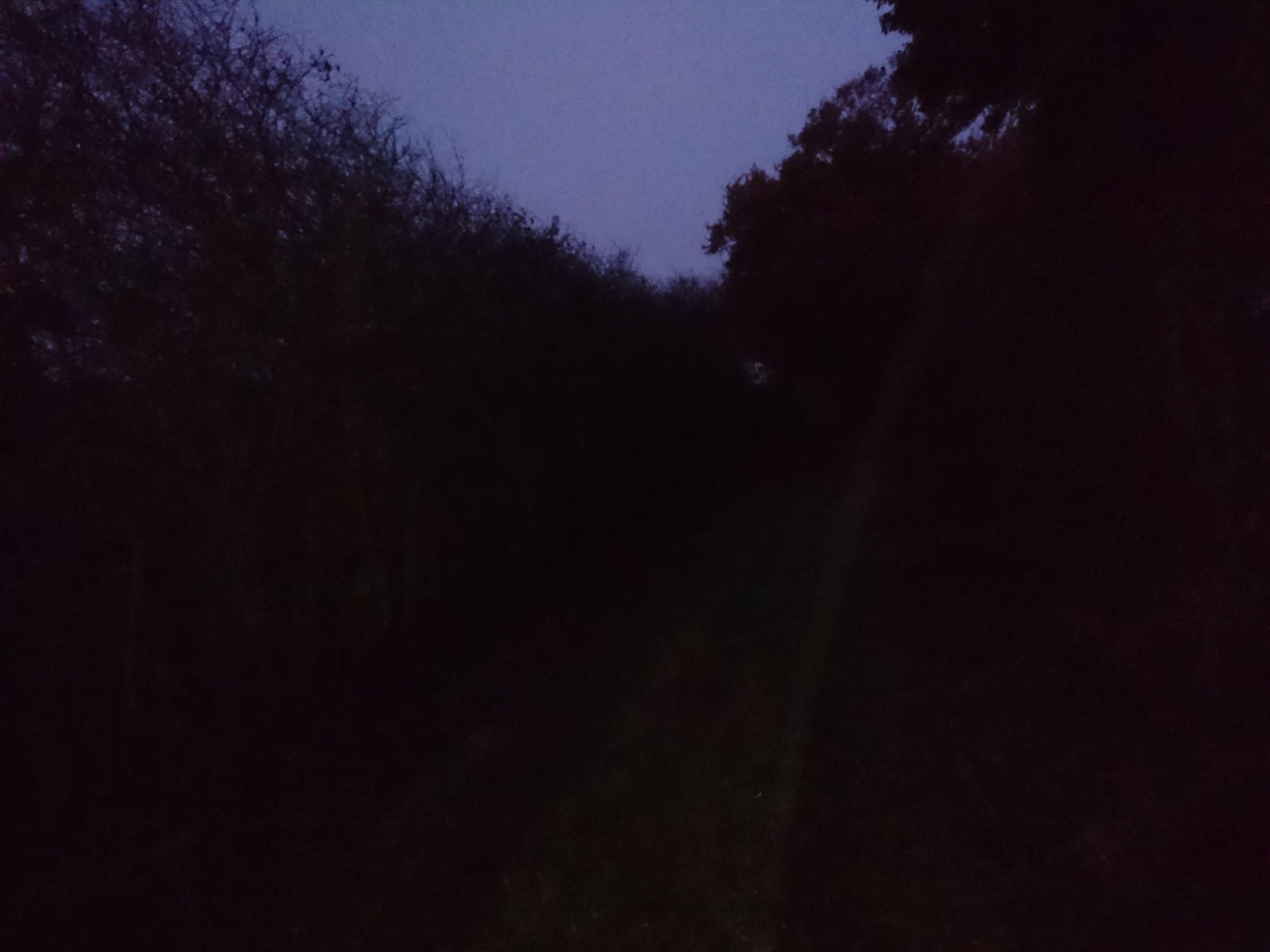 Walking in the Dark & Wet