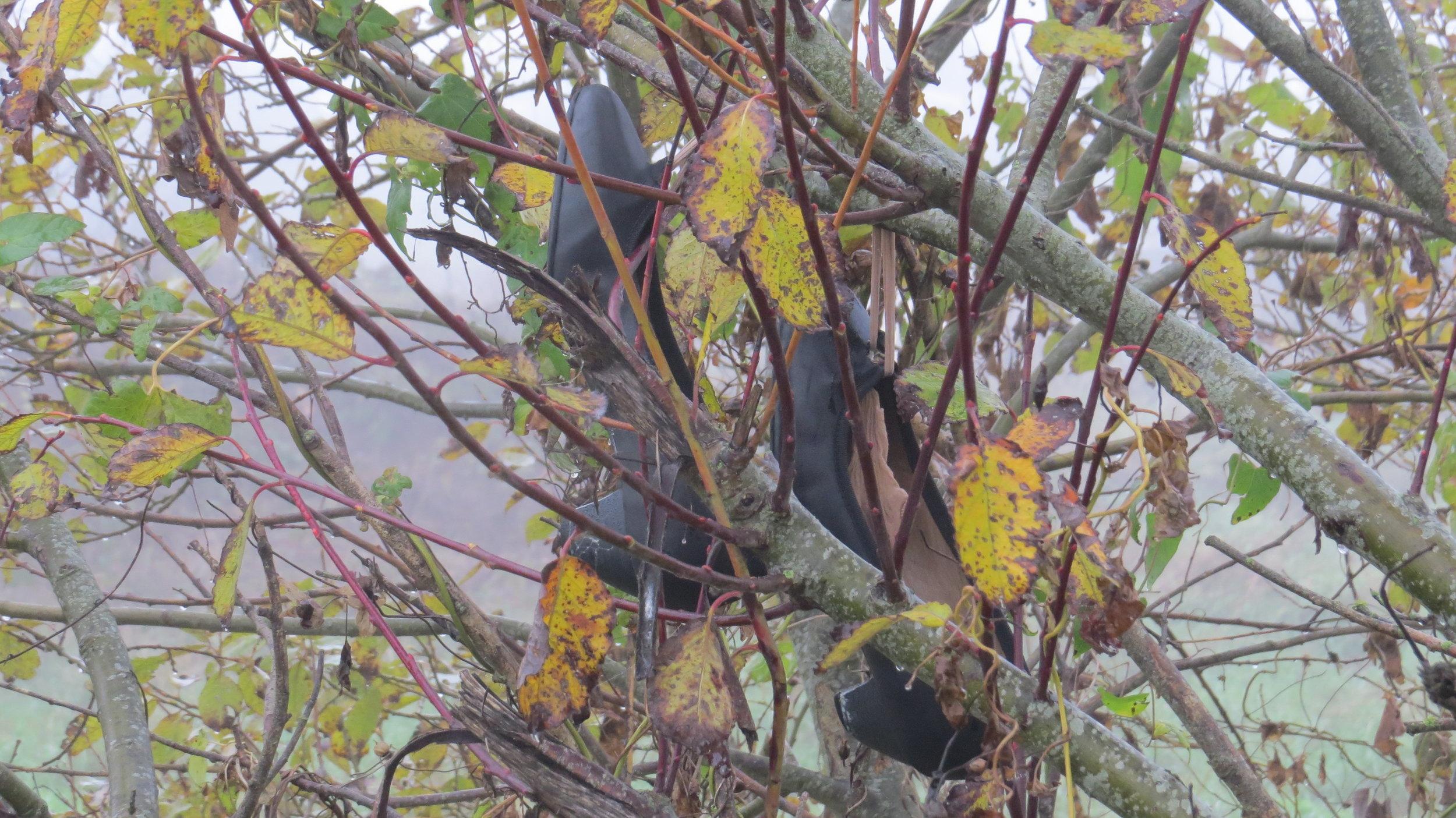 Interesting 'Fruit' on the Tree