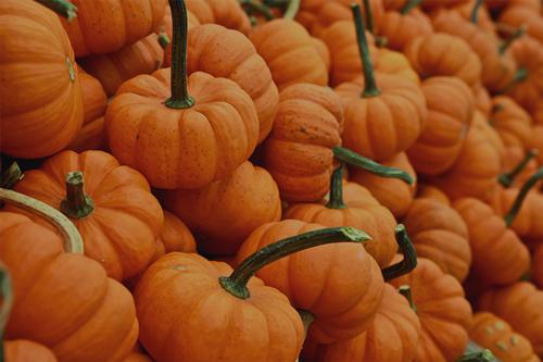 Autumn - Sept. — Oct.