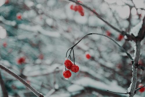 Winter - Nov.— April