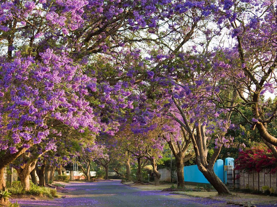 Harare Zimbabwe 4.jpg