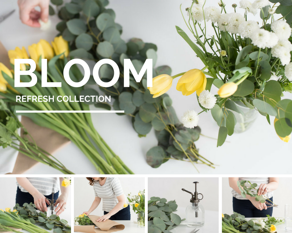 New Stock Photo Collection Bloom