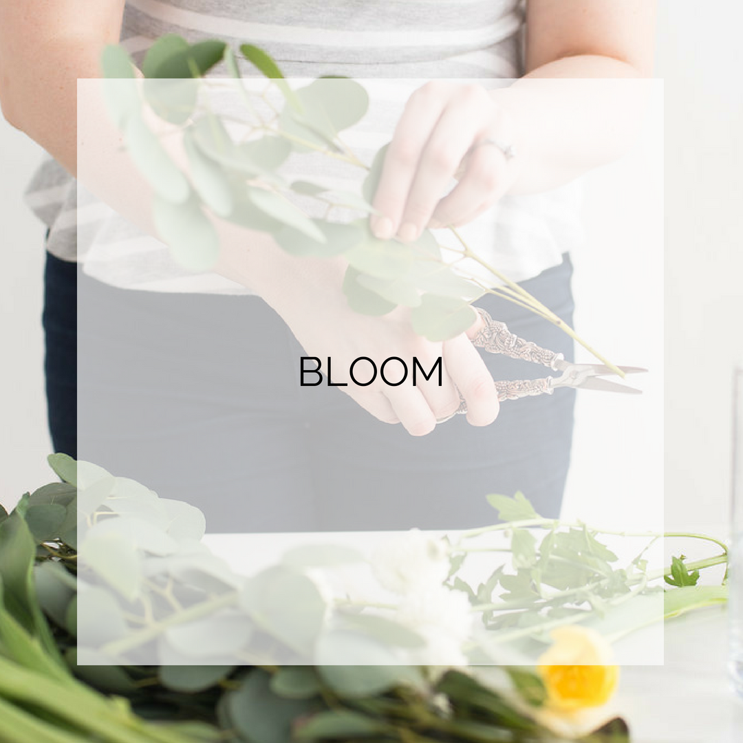 Bloom Collection.png