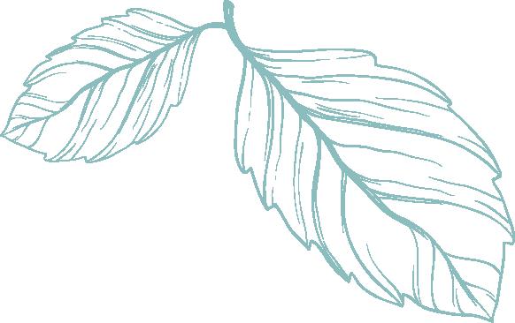 SKB Leaf.png