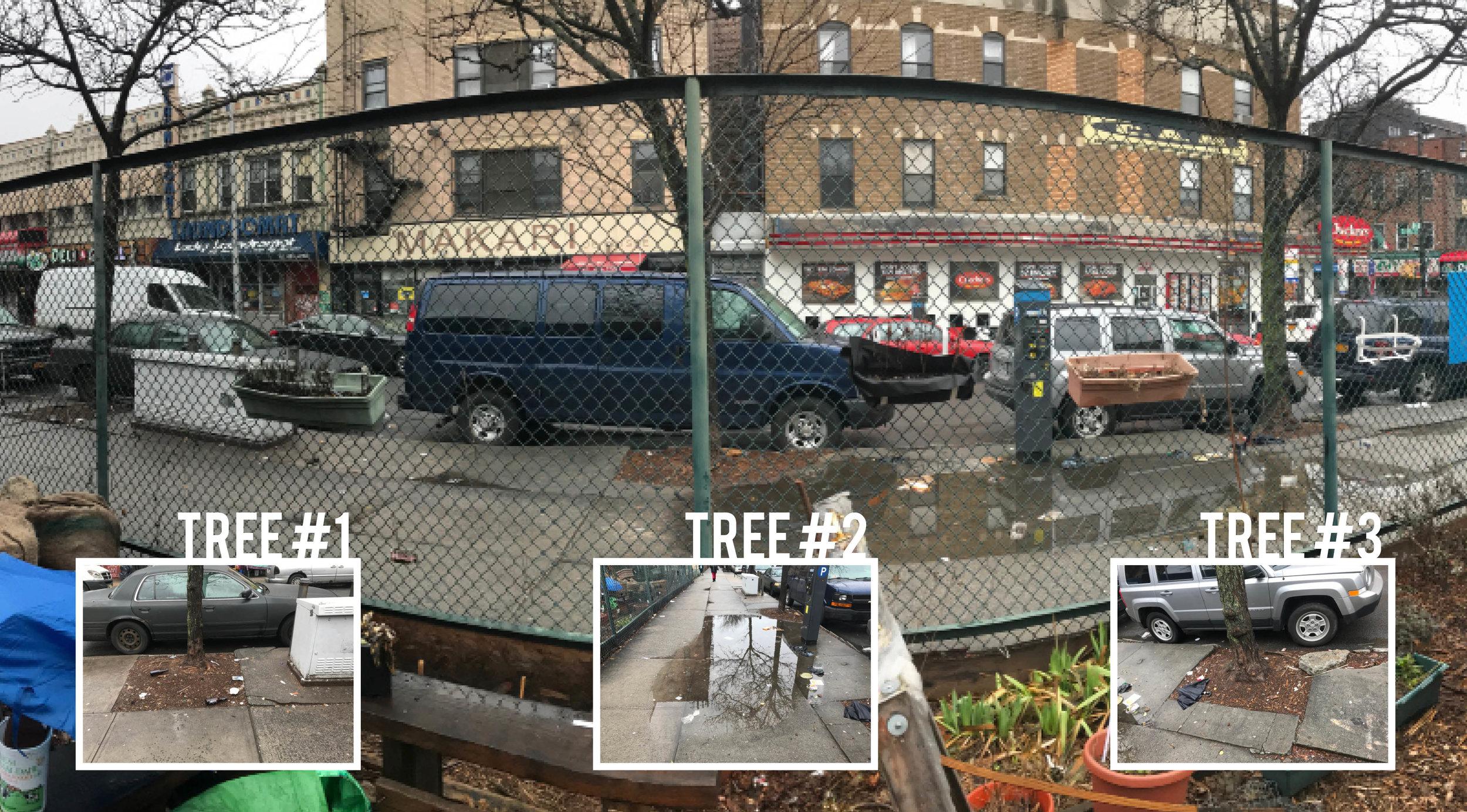 Tree Pano.jpg