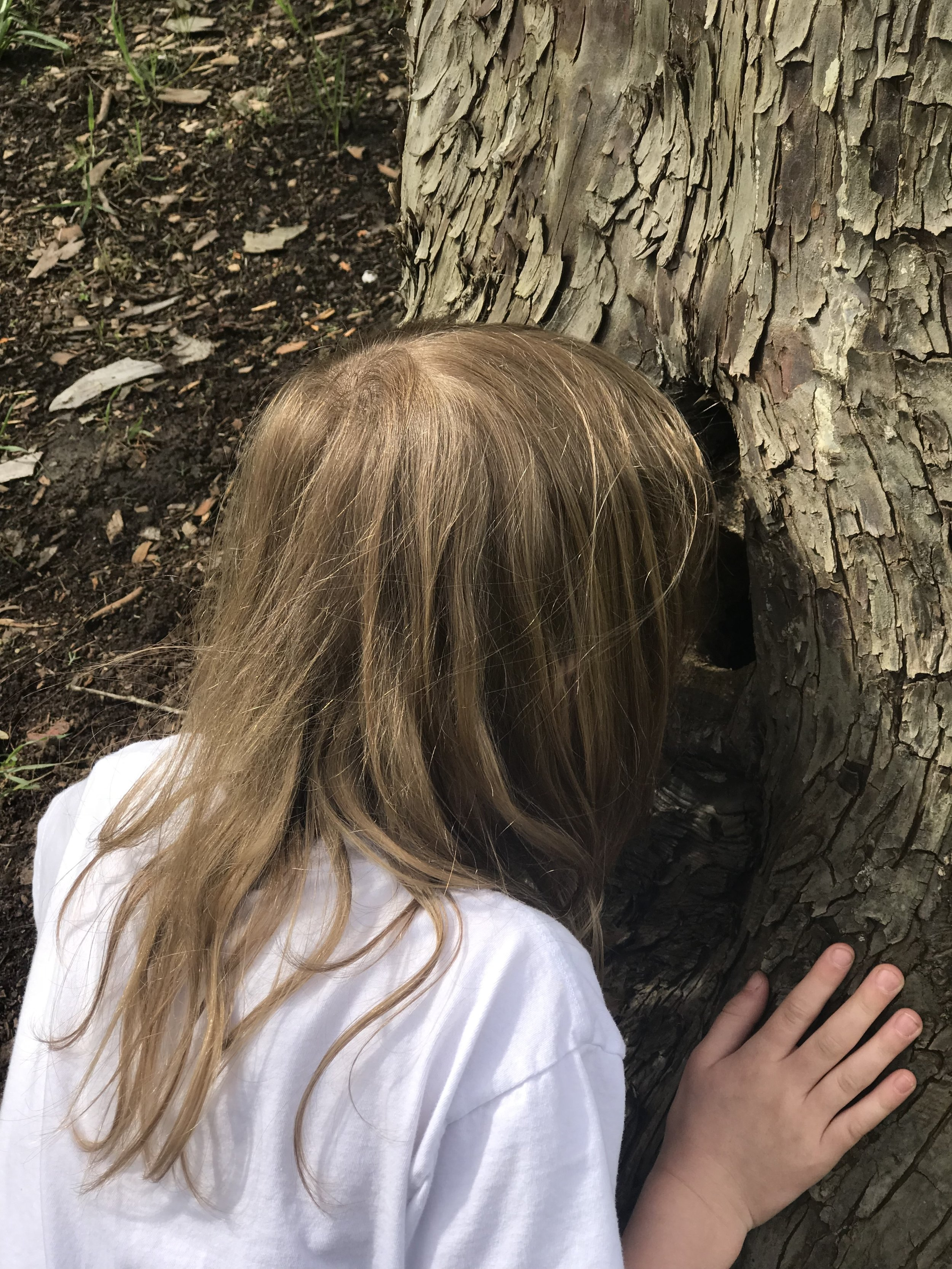 Ember pondering the inside of a tree. Image courtesy of Gretchen Boyer.