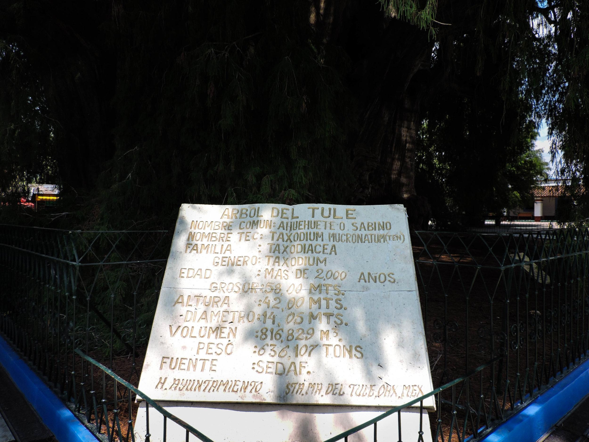 """""""El Tule information sign"""" photo courtesy of Antonia Decker."""