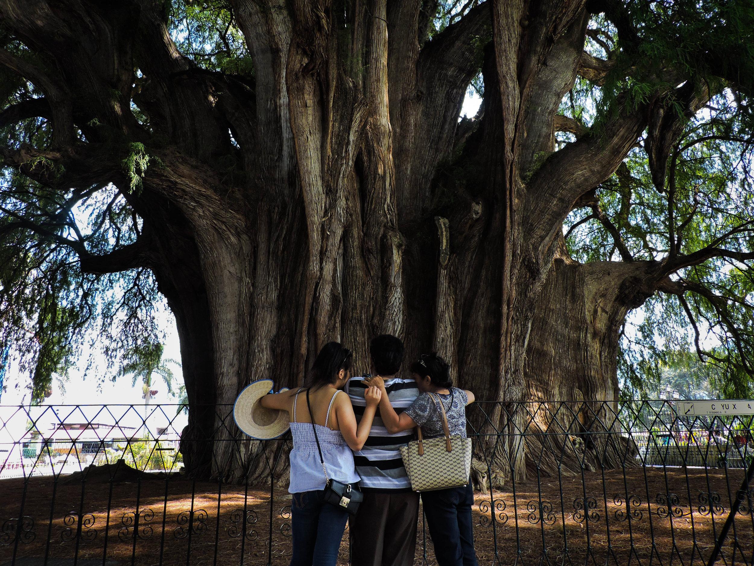 """""""Like tree, like family"""" photo courtesy of Antonia Decker."""