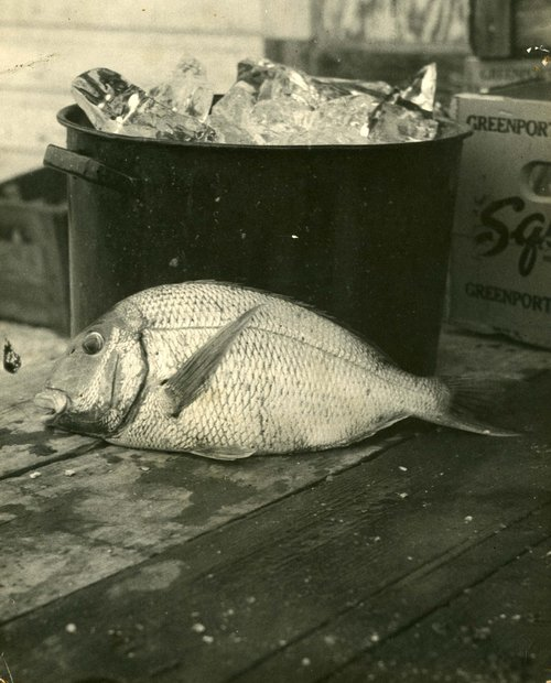 40s_little+fish+and+a+bucket+of+ice.jpg