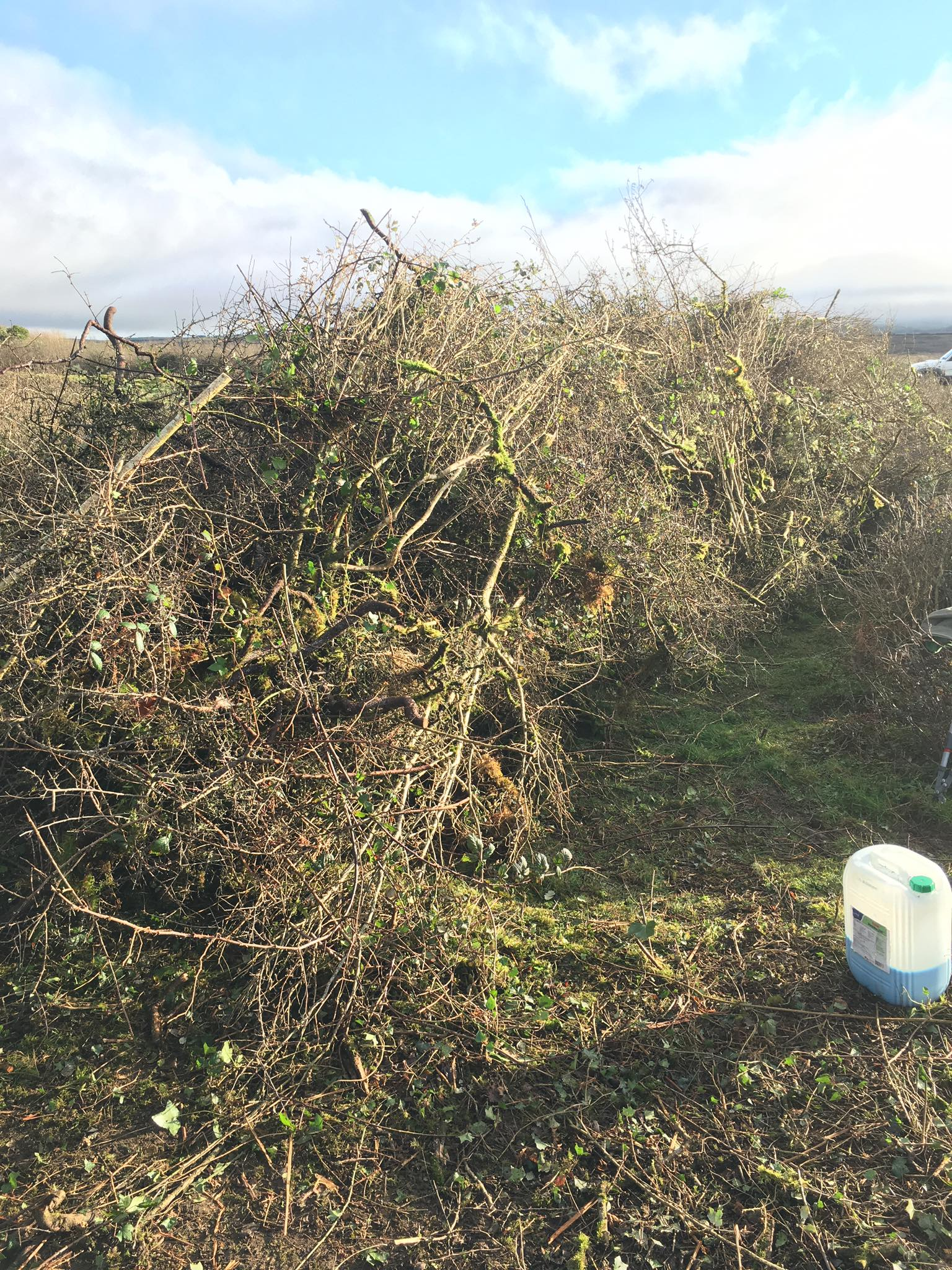 The brush pile…it's hard to tell, but it's about 2 meters high and wide and 10-15 meters long!