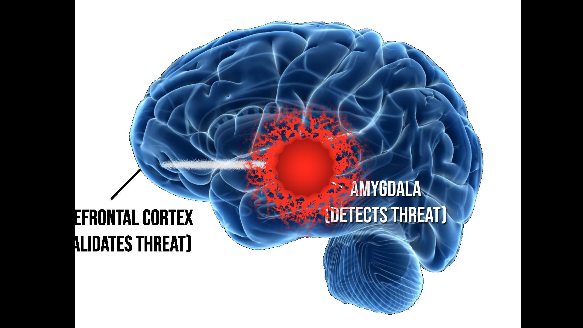 Figure 2: Overheated amygdala; weak neural highway.