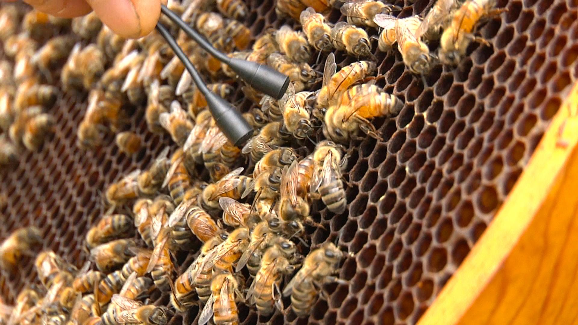 Bee-Sharp-7.jpg