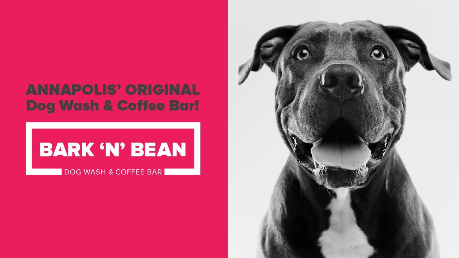 Bark 'N' Bean Dog Wash & Coffee Bar