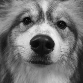 Dog_4.png