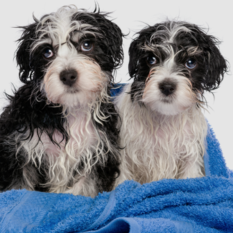 Wash Wash Wednesdays - Every Wednesday, get two self serve washes for the price of one. No coupon necessary.
