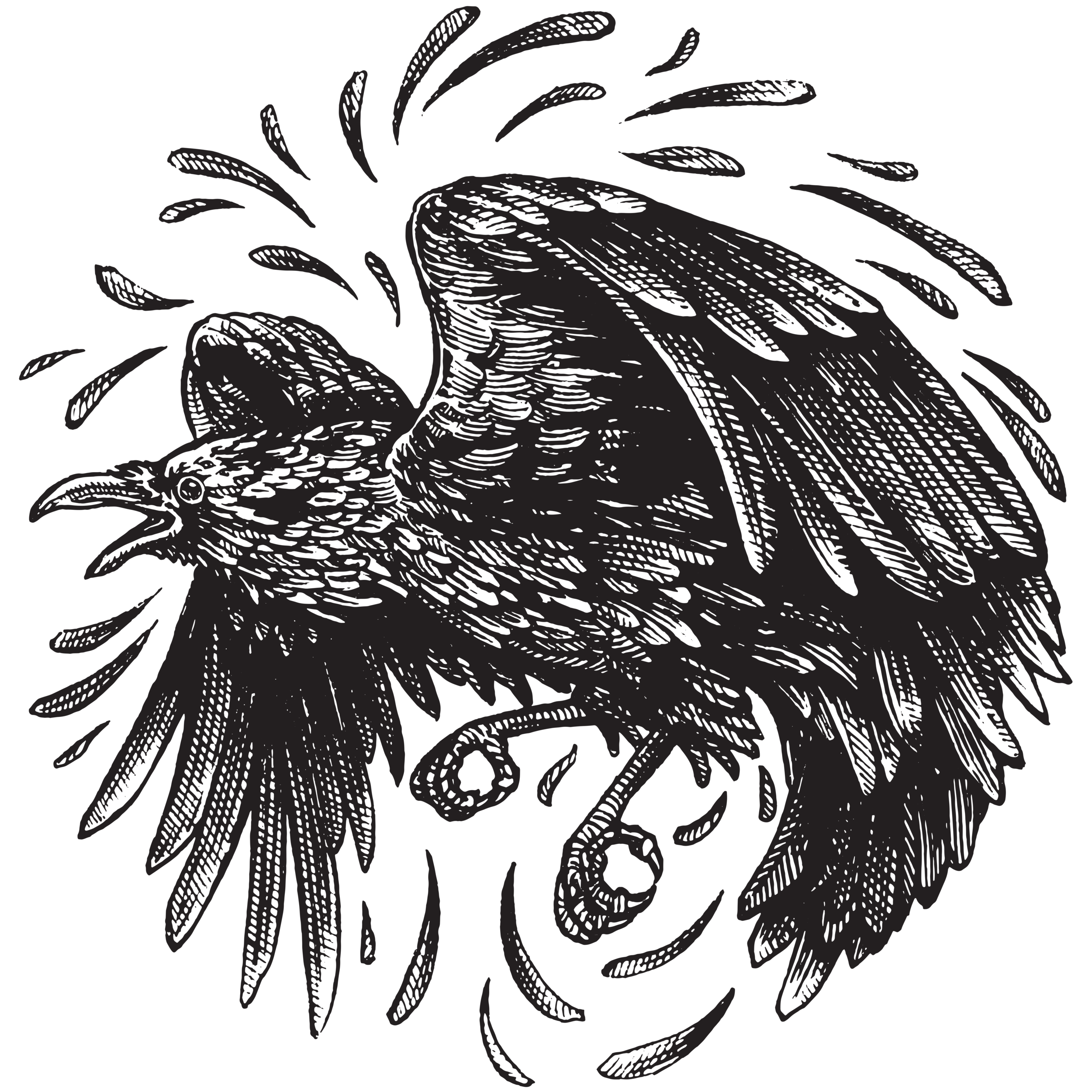Redbubble-Raven.png