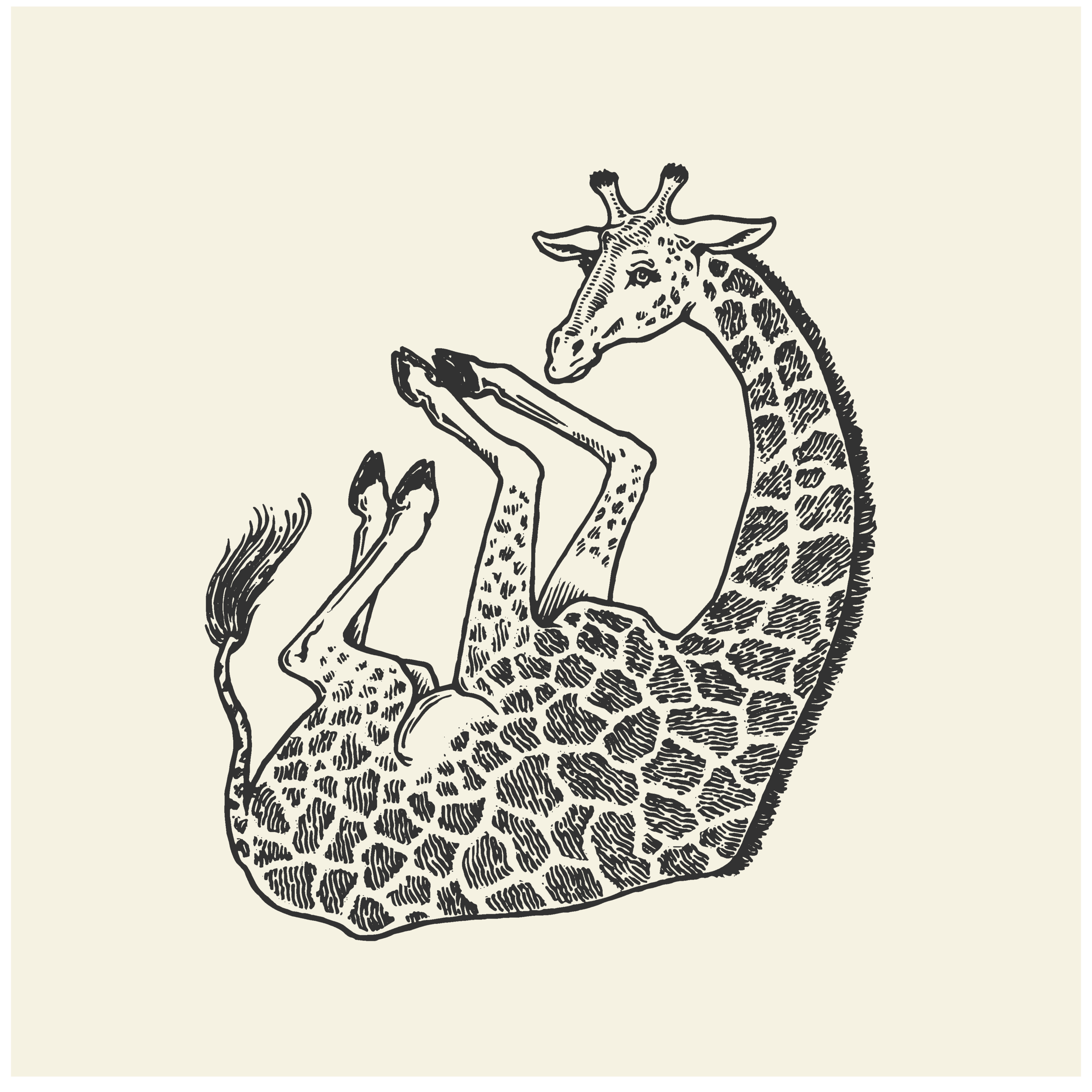 Illustration Portfolio Levity of Animals-05.png