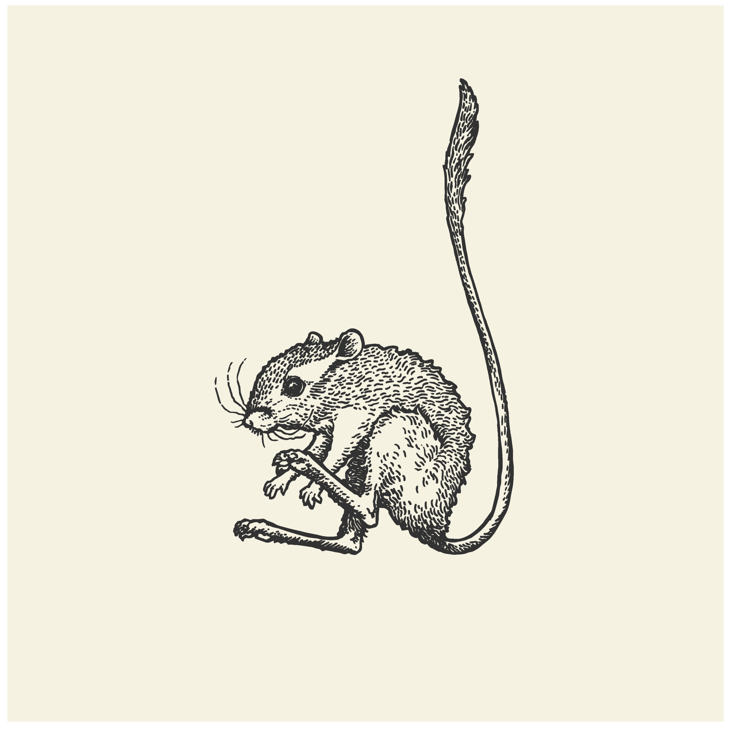 Illustration Portfolio Levity of Animals-14.png