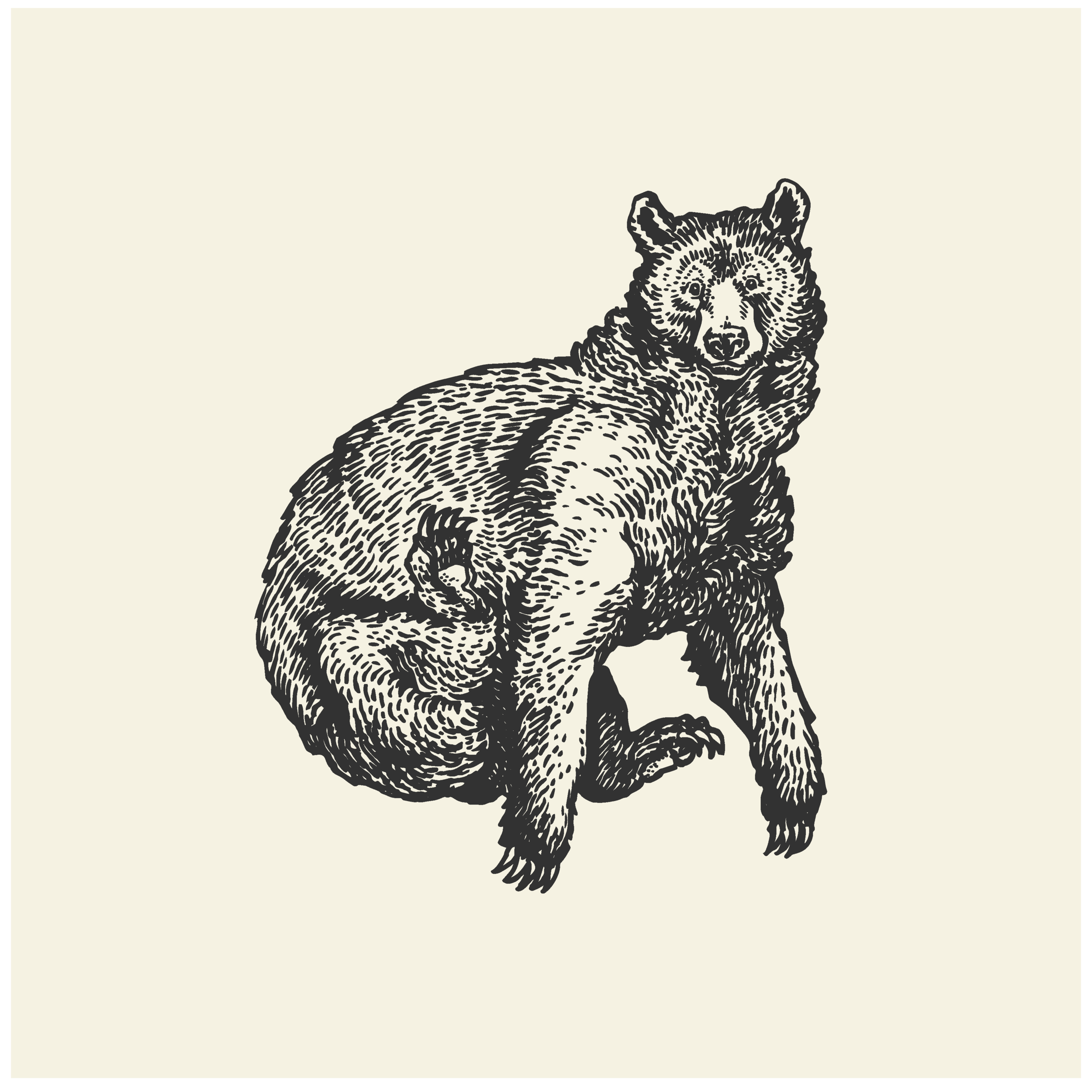 Illustration Portfolio Levity of Animals-15.png