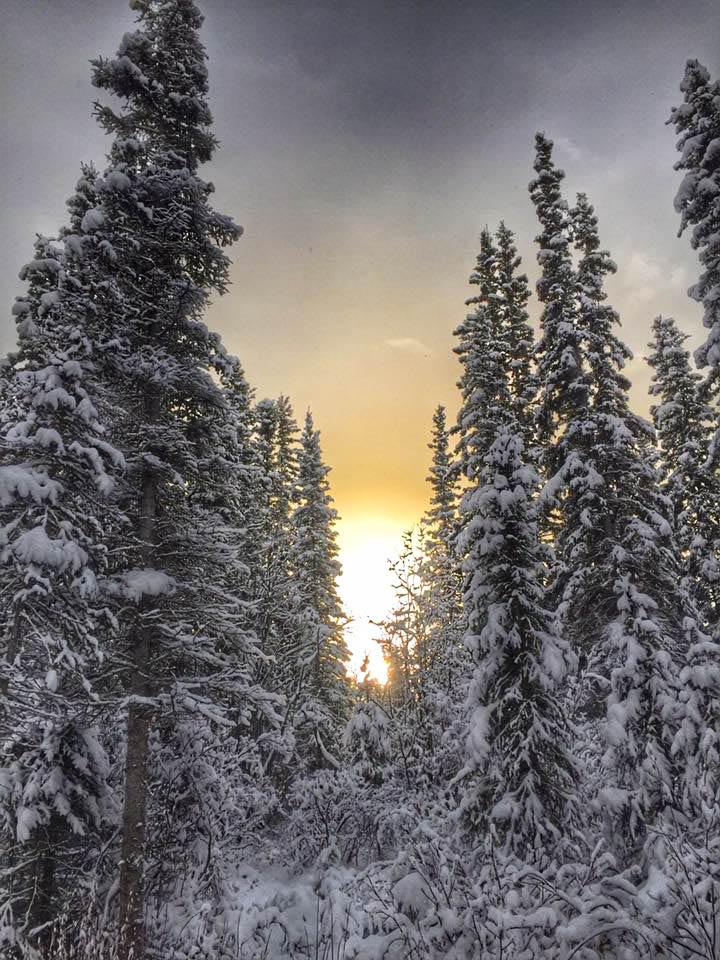 SunsetSilvermineTrees-.jpg