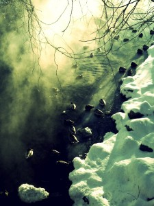 ducks-in-the-river-2-225x300.jpg