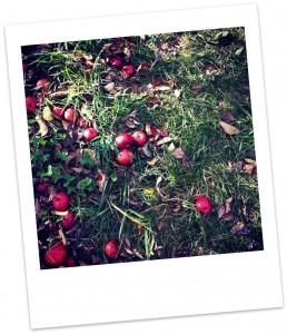 apples-polaroid-258x300.jpg