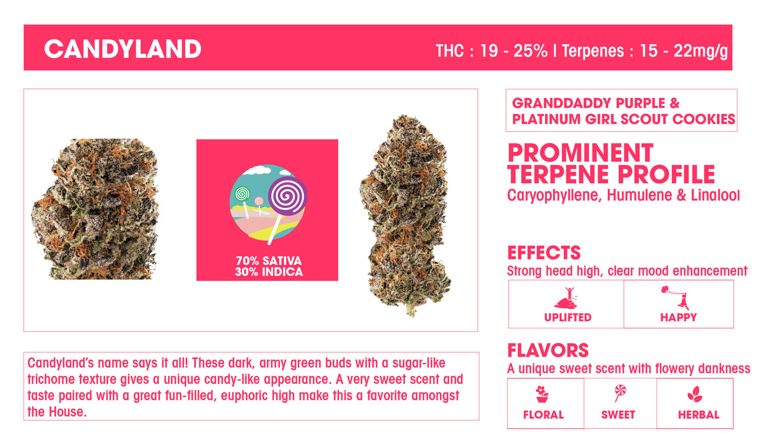 Candyland Marijuana Strain by Sweetwater Farms