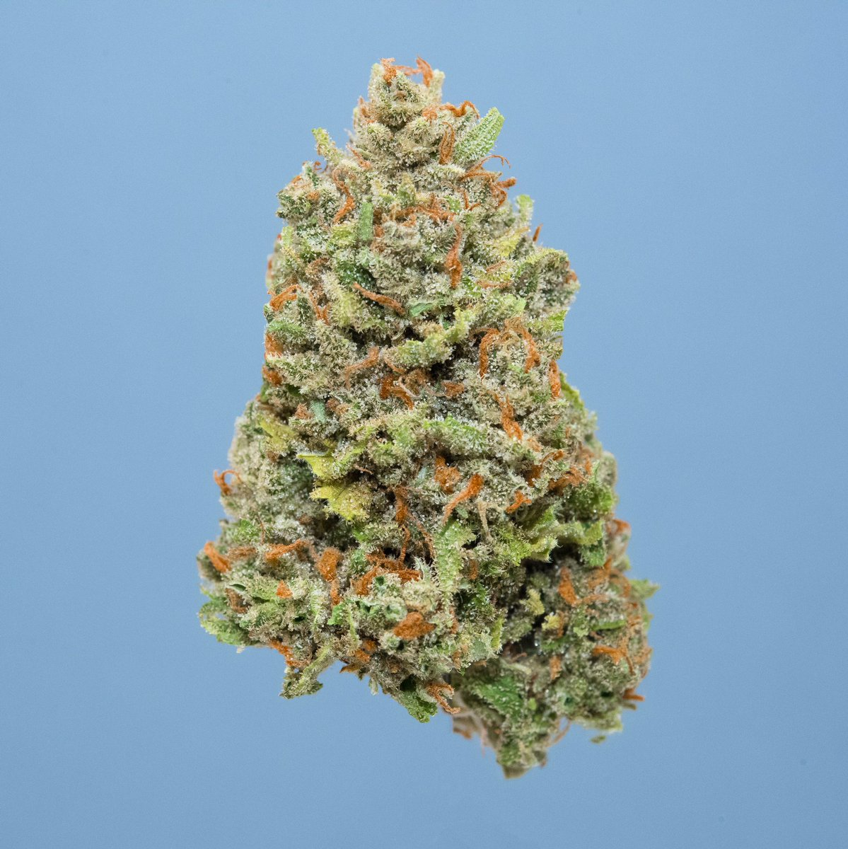 Fun and focused - Available in flower and prerolls