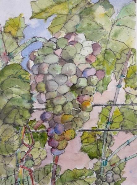 Brenda's Grapes by John Lane (Watercolor) | $140