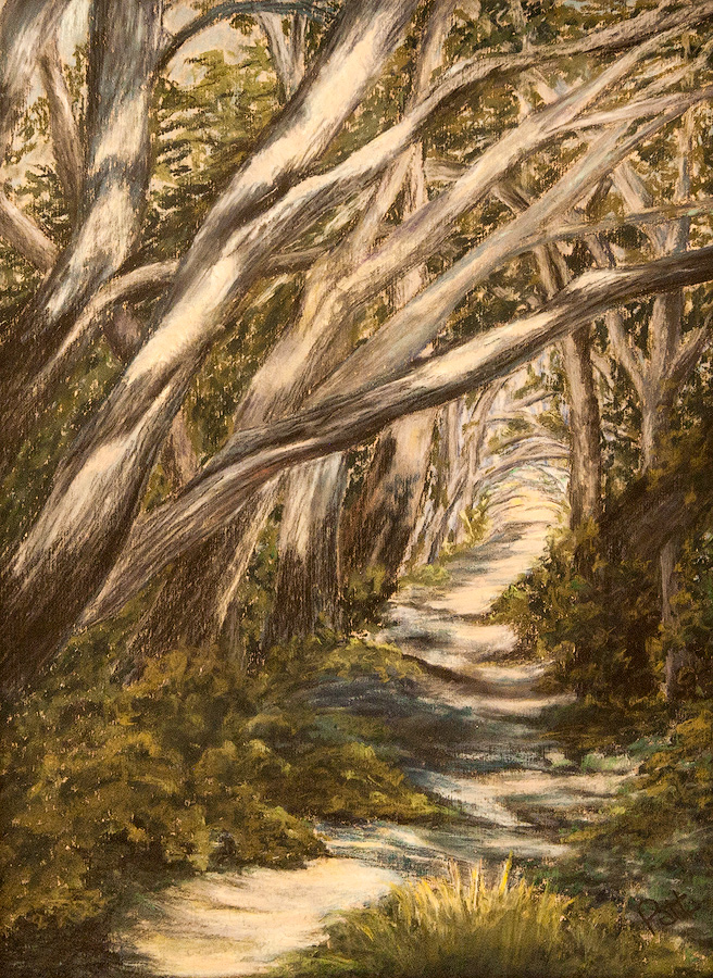 Into Ancient Cypress