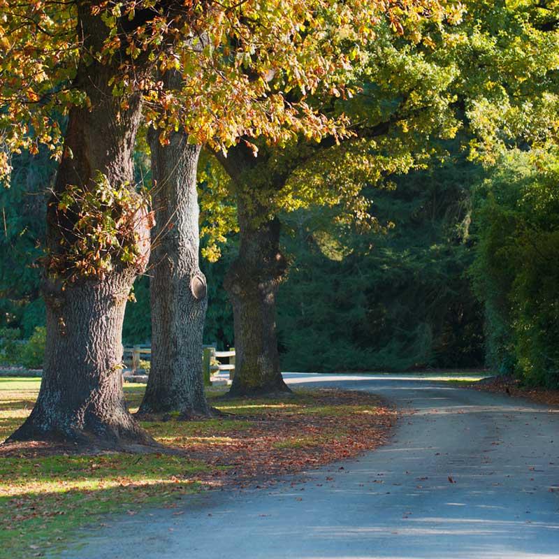 Knottingley Park, Waimate