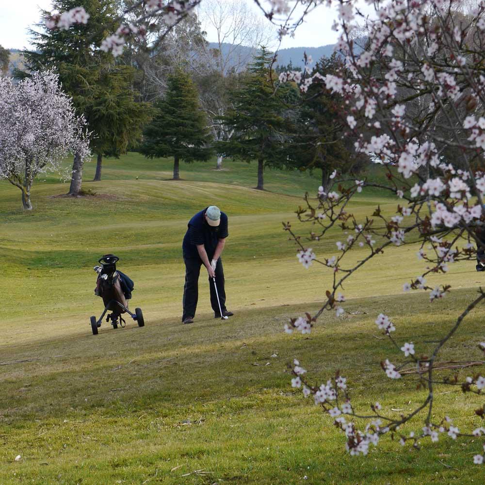 waimate golf club -