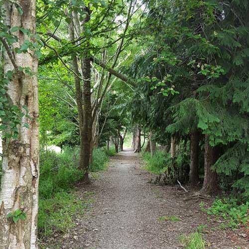 Garlands Bush Track, Waimate