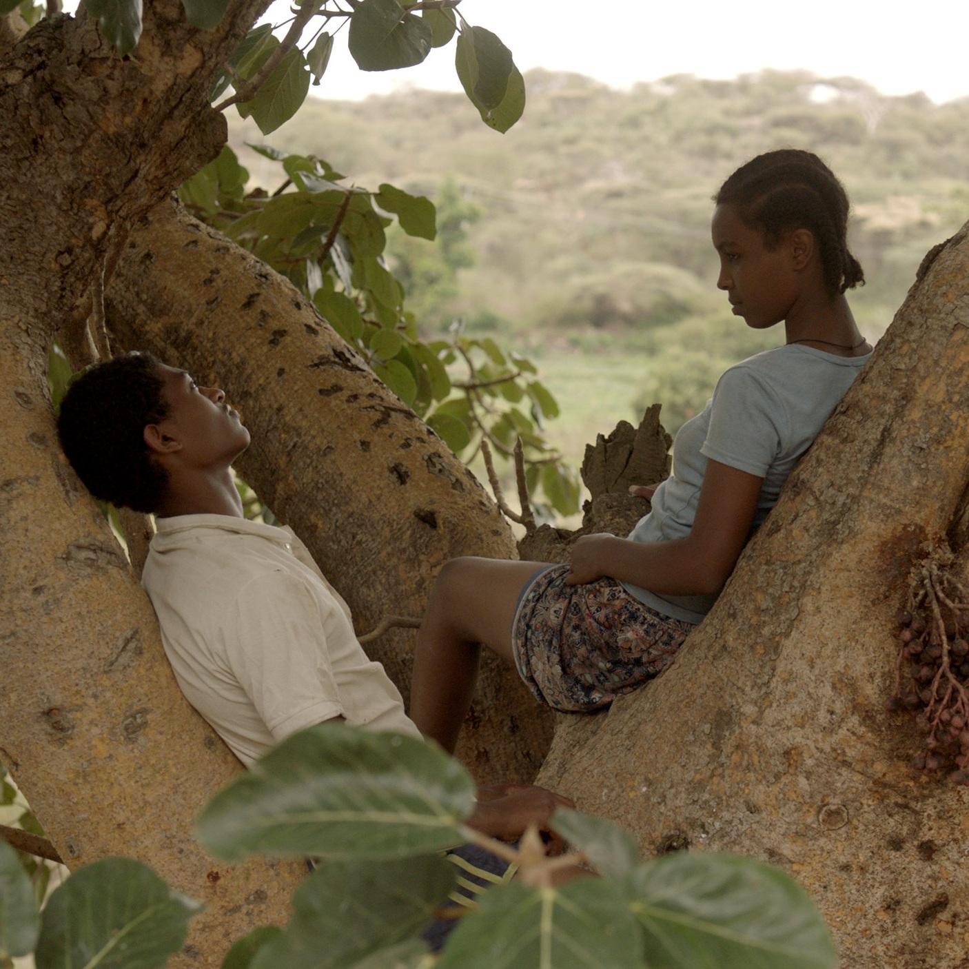 Fig+Tree+00014.jpg