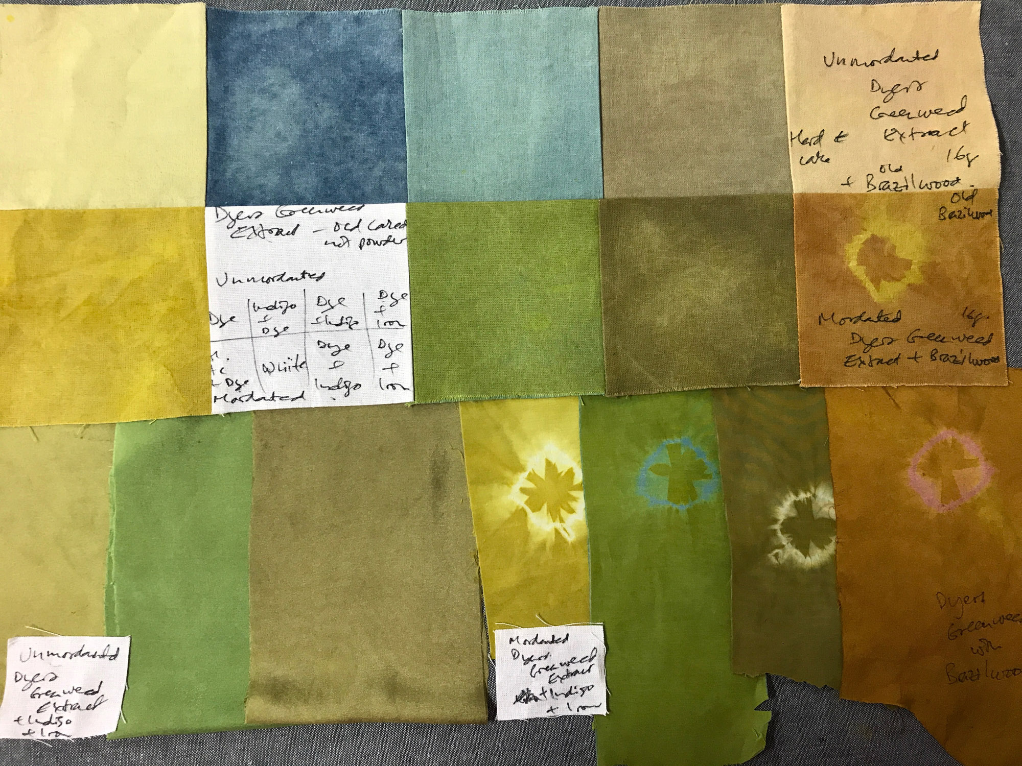 Dyers Greenweed dyed samples on silk and cotton